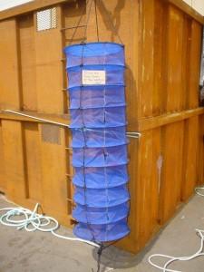 10 Tier 50cm dia Lantern Net